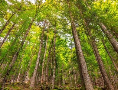 Anti-stress : marcher en forêt