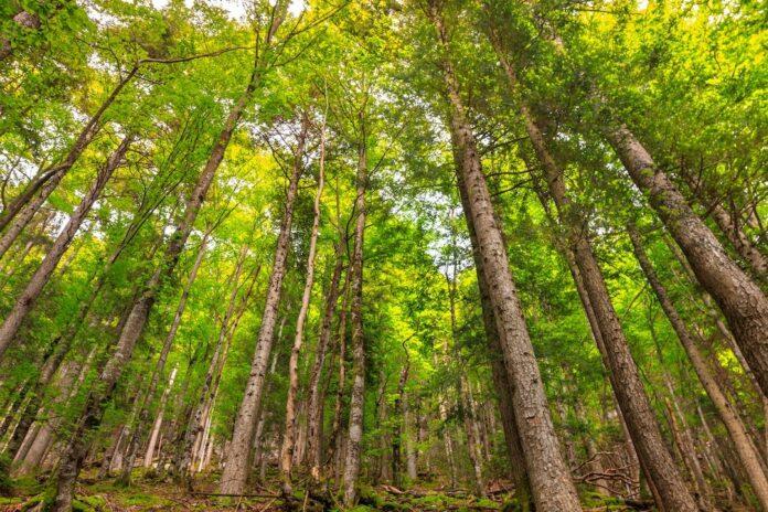 marcher en forêt anti stress