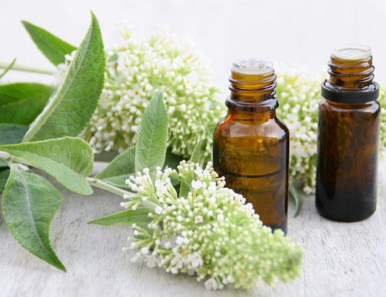 Anti-stress : top 3 des plantes apaisantes