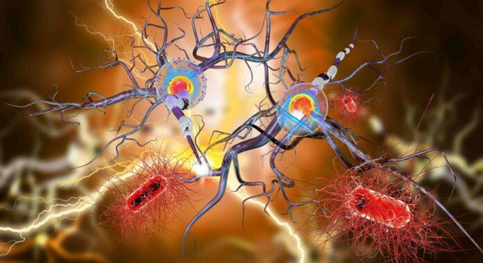 Illustration 3D de cellules nerveuses, concept de maladies neurologiques, tumeurs et chirurgie du cerveau, épilepsie