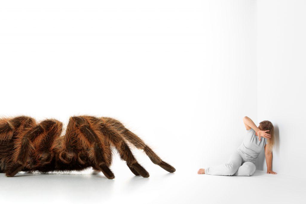 Troubles Phobiques : Araignée