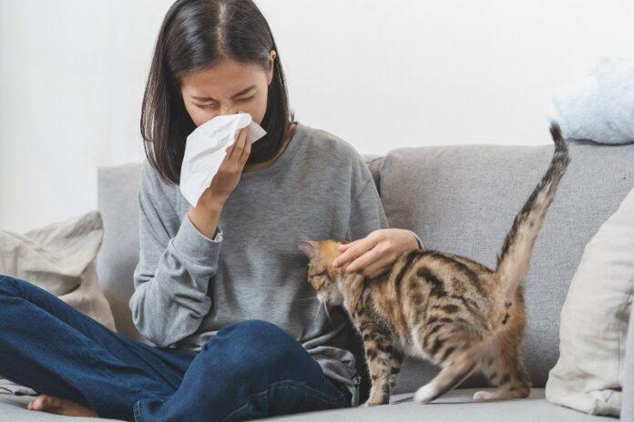 pourquoi les allergies sont-elles en hausse : animaux de compagnie chat