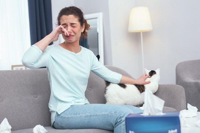 Comment prévenir une allergie : chat